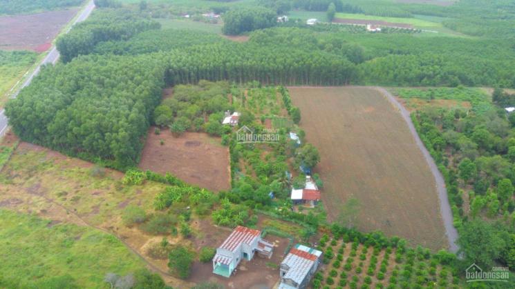 Cần bán 2000m2 đất gần Hương Lộ 10, xã Sông Nhạn, huyện Cẩm Mỹ ảnh 0