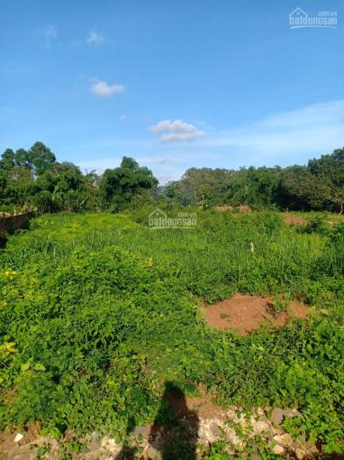 Bán đất mt đường lớn 10m, DT: 7sào (7.000 m2) có cây ăn trái. Giá: 8.5 tỷ 0909944606 ảnh 0