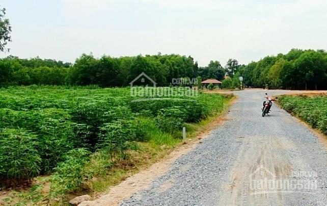 Đất Huyện Tân Biên 361.8m2, full thổ cư ảnh 0