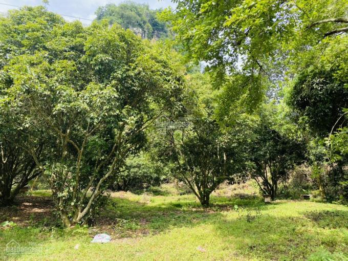 Chủ gửi bán nhanh 1.6ha có 400m2 đất thổ cư, MT hơn 100m tại Lương Sơn - Hòa Bình giá 600.000/m2 ảnh 0