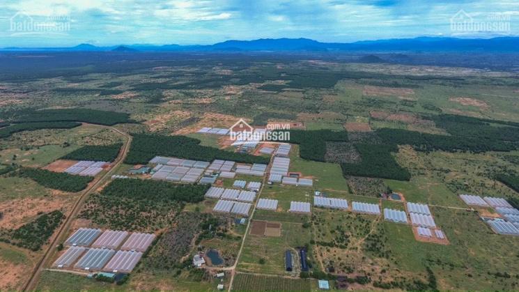 Chính chủ cần bán trang trại 8 hecta đất tại khu nông nghiệp công nghệ cao gần Mũi Né, Bình Thuận ảnh 0
