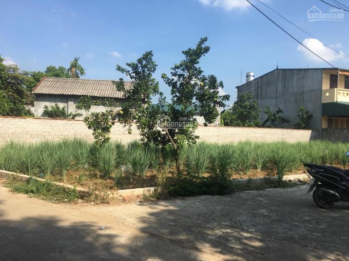 Tìm chủ mới cho lô góc 216m2 đất ở Kim Sơn, Sơn Tây, giá nhỉnh tỉ tí ảnh 0