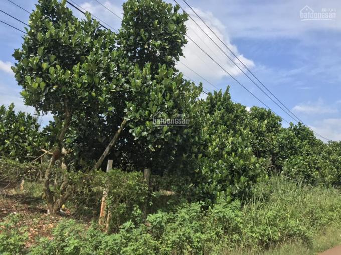 Bán lô đất bơ sầu riêng 1578m2 gần TP Long Khánh, giá 1.3 tỷ, LH: 0906234169 ảnh 0