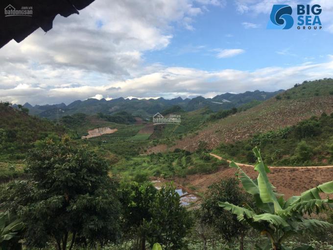 Trang trại 4ha, tại Mộc Châu, sẵn cây ăn quả, sẵn ao. LH: 0979288822 ảnh 0