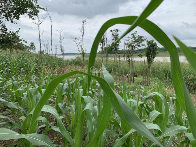 Bán 7 sào 2 đất View Hồ Sông Ray, Huyện Cẩm Mỹ, Tỉnh Đồng Nai giá 5.5 tỷ LH: 0935605866 ảnh 0