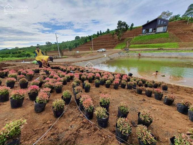 Đất nền biệt thự khu nghỉ dưỡng An Khuê tại Bảo Lâm, sổ riêng CC ngay, giá chỉ từ 3,9 triệu/m2 ảnh 0