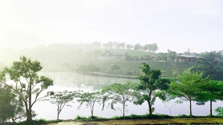 Đất biệt thự nghỉ dưỡng tại Bảo Lộc, giá rẻ ảnh 0