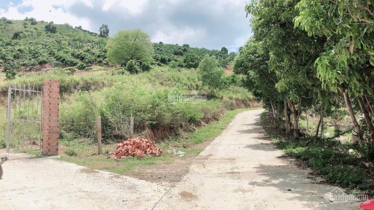 Bán rẫy Vĩnh Phương, Nha Trang, Khánh Hòa, giá rẻ ảnh 0