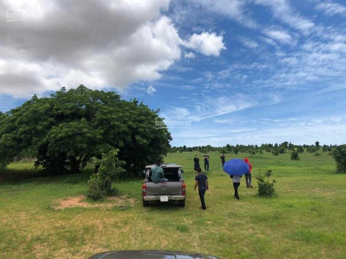 Cần bán miếng đất nông nghiệp tại Phan Rí Thành, sổ đỏ riêng, ngay gần KBL Bàu Trắng ảnh 0