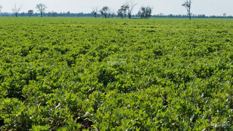 Cần bán quỹ đất dự án nông nghiệp, trang trại  từ 100 - 1000 hécta tại Đăk Lăk ảnh 0