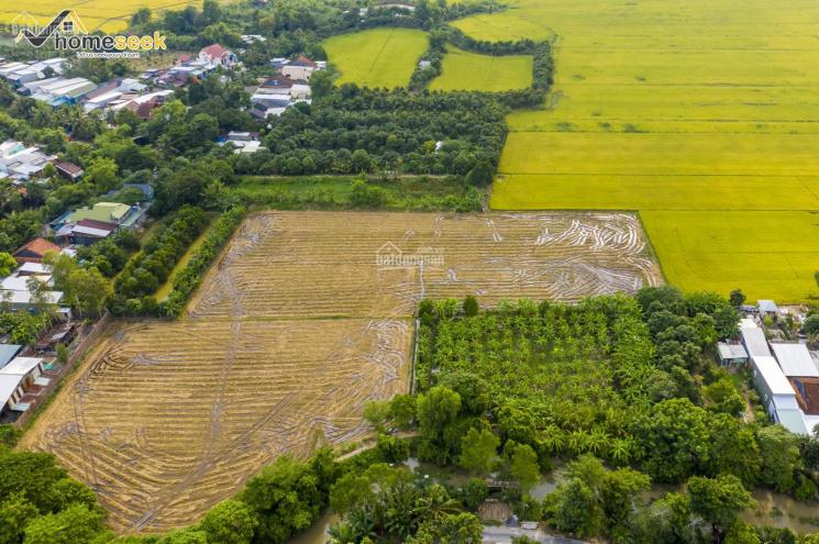 Đất ruộng thuộc phường Mỹ Quý, Long Xuyên, An Giang - DR004 ảnh 0
