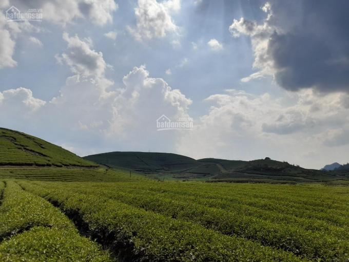 Cần bán 15 ha thị trấn Nông Trường Mộc Châu, Sơn La ảnh 0