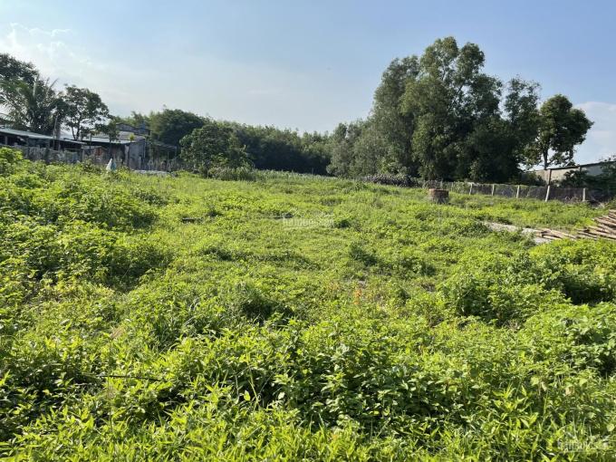 Bán đất mặt tiền Nguyễn Thông - TX LaGi thổ cư 500m2 giá rẻ 175 triệu/m ngang ảnh 0