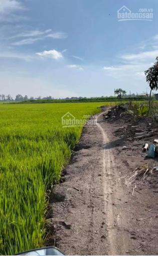 Bán 8 công ruộng gần chợ Vĩnh Khánh, Thoại Sơn. LH: 0946797511 ảnh 0
