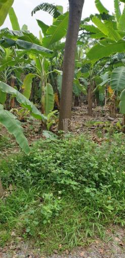 Bán đất mặt sông Đào, Nam Định, 1.800 m2 giá 1,5 tỷ ảnh 0