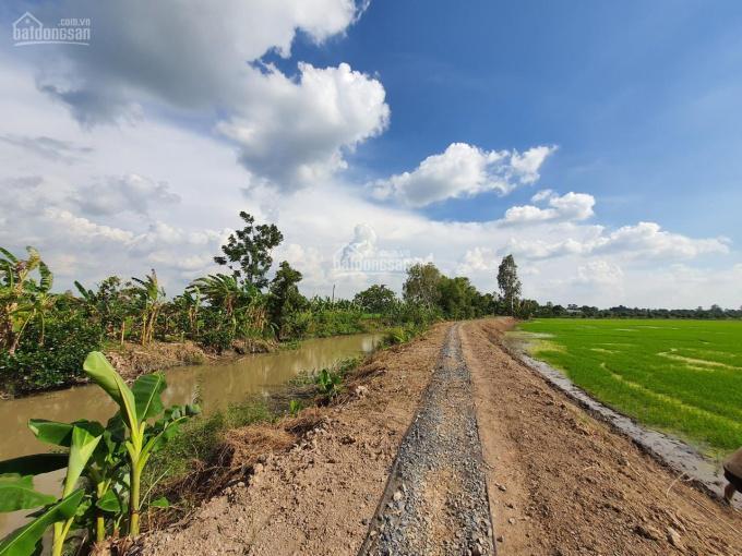 Bán 721m2 đất ruộng giá rẻ, xã Mỹ Thọ, Huyện Cao Lãnh, Đồng Tháp ảnh 0