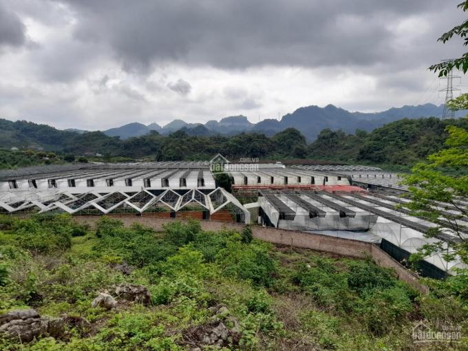 Bán đất Mộc Châu giá tại dân cho khách làm farmstay khai thác du lịch ảnh 0