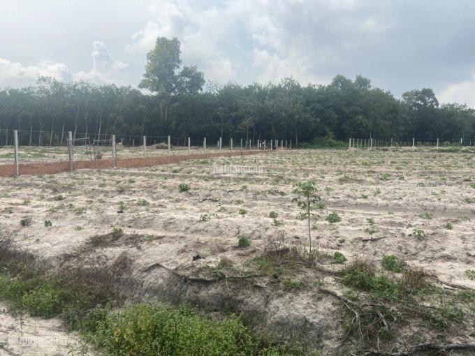 Bán gấp 1000m2 - 2.1 triệu/m2 xã Phước Bình, huyện Long Thành ảnh 0