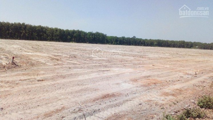 Chính chủ cần bán lô đất Chánh Phú Hòa, ngay KCN Mỹ Phước 2, gần chợ Chánh Lưu, sổ hồng riêng ảnh 0