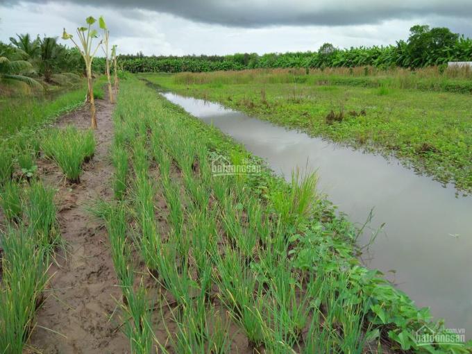 Cần chuyển nhượng gấp mảnh đất tại xã Khánh Lâm, huyện U Minh, Cà Mau. Liên hệ SĐT: 0973.976.529 ảnh 0