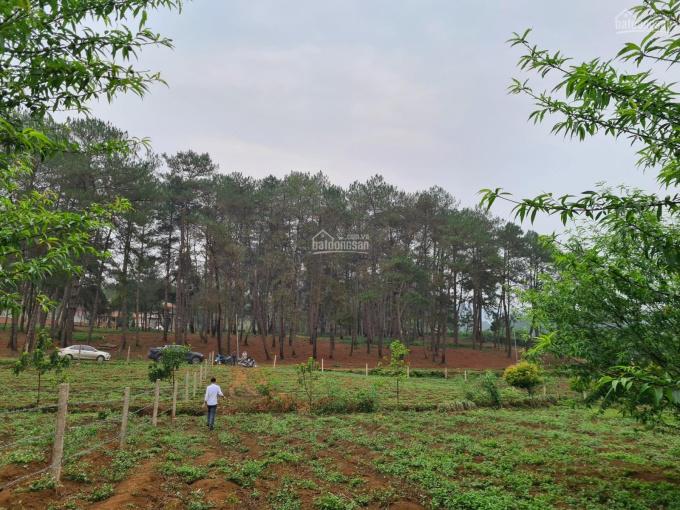 Mộc Châu: Lô đất làm nghỉ dưỡng CÓ 102 tại thôn Bản Áng - Mộc Châu - Sơn La ảnh 0