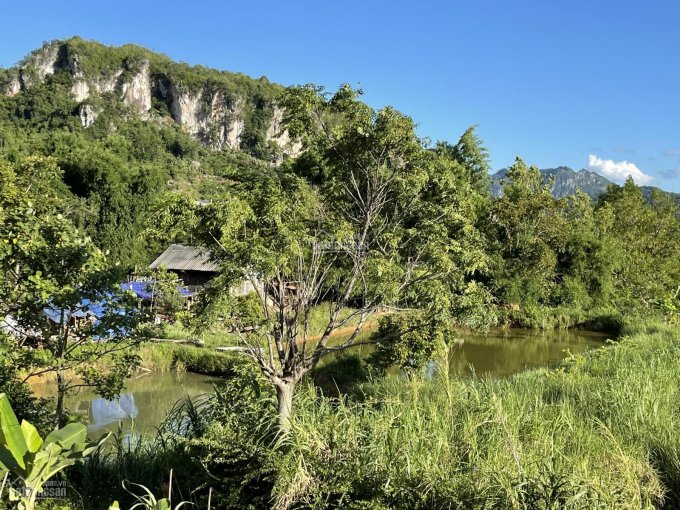 Bán đất Mường Sang, Mộc Châu, cách thác dải yếm 3km, cách trung tâm thị trấn 700m ảnh 0