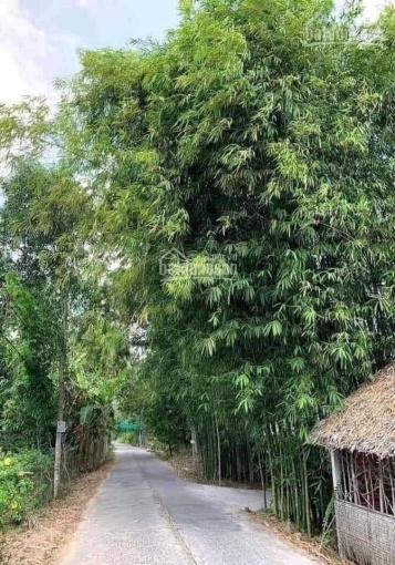 Bán nhanh siêu phẩm ngõ phố Ngô Xuân Quảng - Trâu Quỳ - Gia Lâm 117.6m2. LH 0982368104 ảnh 0
