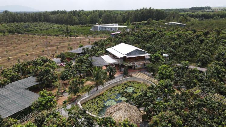 Chỉ với 600tr sở hữu lô đất 1000m2 gần KCN Định Quán, Phú Cường ảnh 0